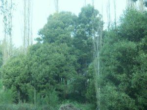 Hardwoods&Poplars