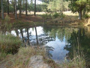 McLeans pond