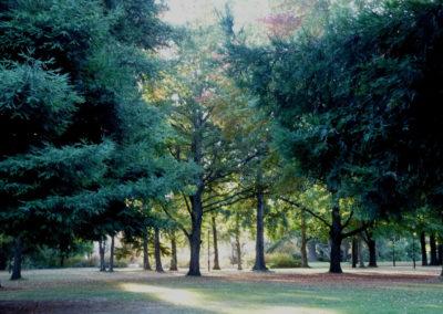 Avonhead_Gardens_8
