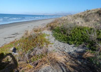 Dunes_Wetlands_5