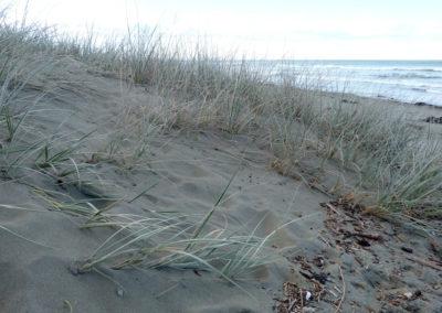 Dunes_Wetlands_17