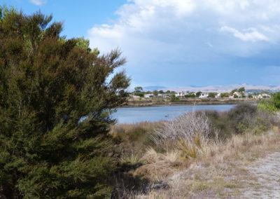 Estuary_Marshes_6